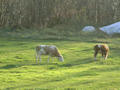 Cows pasturing: Villabruna is surrounded by fields which can become  the proper place for relaxing walks.